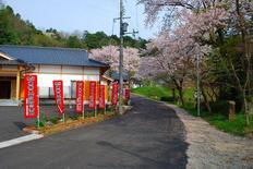 妙楽寺の桜, 7kaji.jp_111.jpg