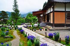 遍照寺の桔梗, 7kaji.jp_110.jpg