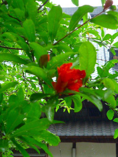 高照寺風景 54