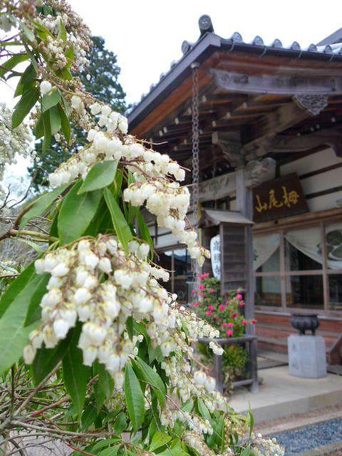 高照寺風景 75