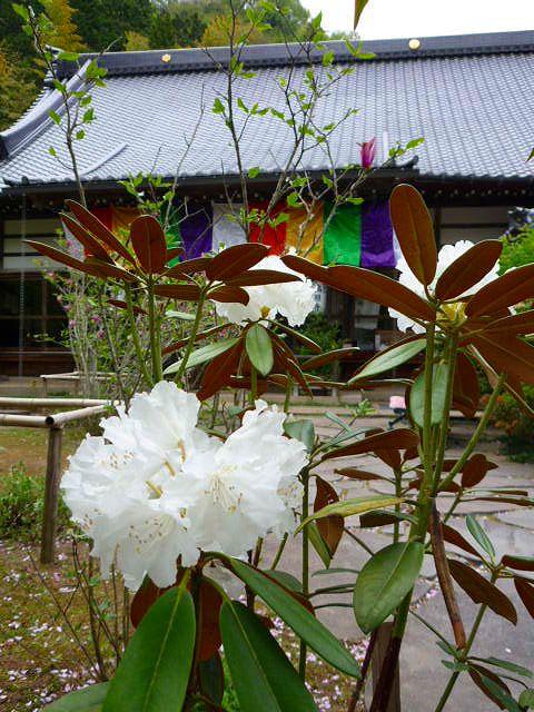 高照寺風景 88