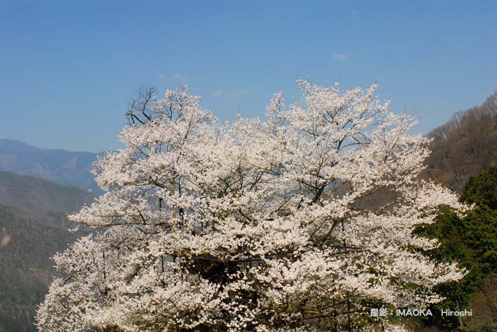 IMAOKA hiroshiさん提供画像 38