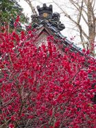 高照寺風景 5