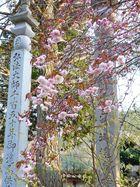高照寺風景 15