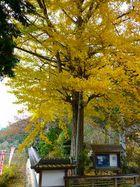 高照寺風景 39
