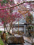 高照寺風景 74