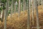 IMAOKA hiroshiさん提供画像 7