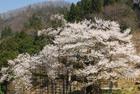 IMAOKA hiroshiさん提供画像 37